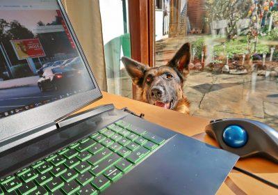 Homeoffice mit Wachhund